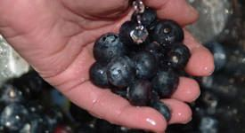 Antioxidant Supplement | Benefits of Antioxidants
